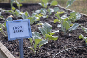 Green vegetables planted for the local food bank.
