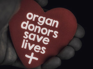 A reminder of the importance of donating blood and organs.  Hands holding a heart with a message that reads: Organ donors save lives.