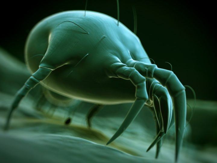 'Ticks Surprise Us:' 2021 May Be Big Lyme Disease Year