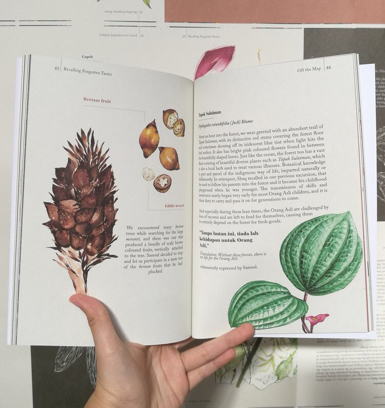 Recalling Forgotten Tastes features illustrations and conversations with Orang Asli guides